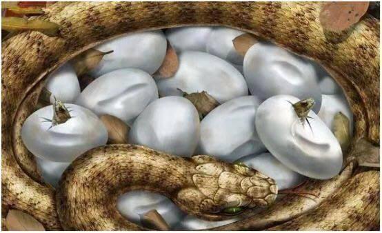老头救下了―窝蛇蛋,百年后家门口出现一条大蛇...