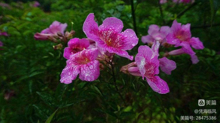 万紫千红总是春 - 凭海临风 - 心灵的港湾