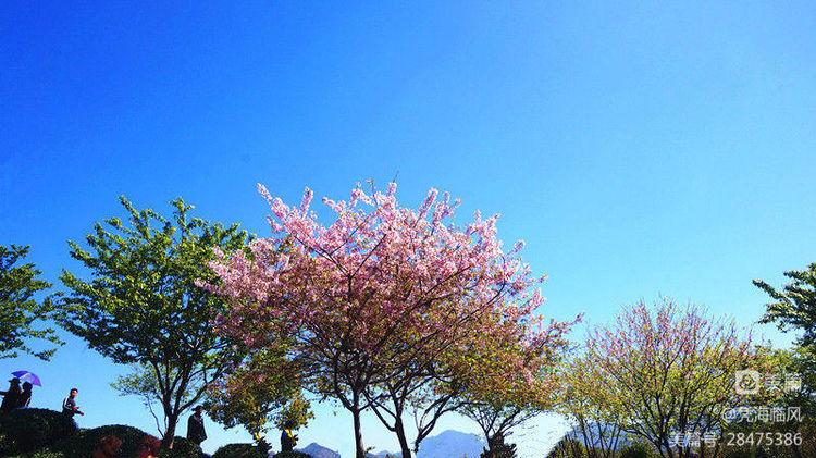 阳春三月,快乐春游 - 凭海临风 - 心灵的港湾