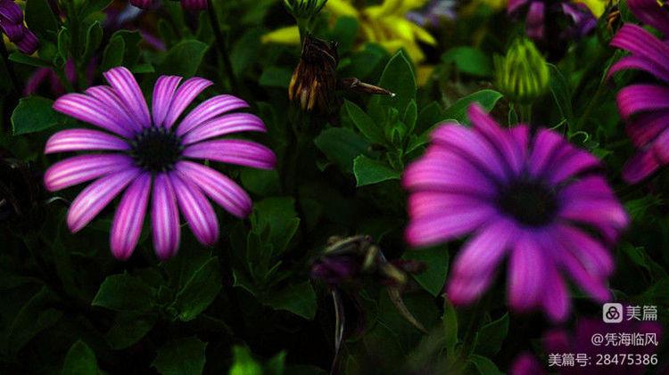 春暖花开 - 凭海临风 - 心灵的港湾