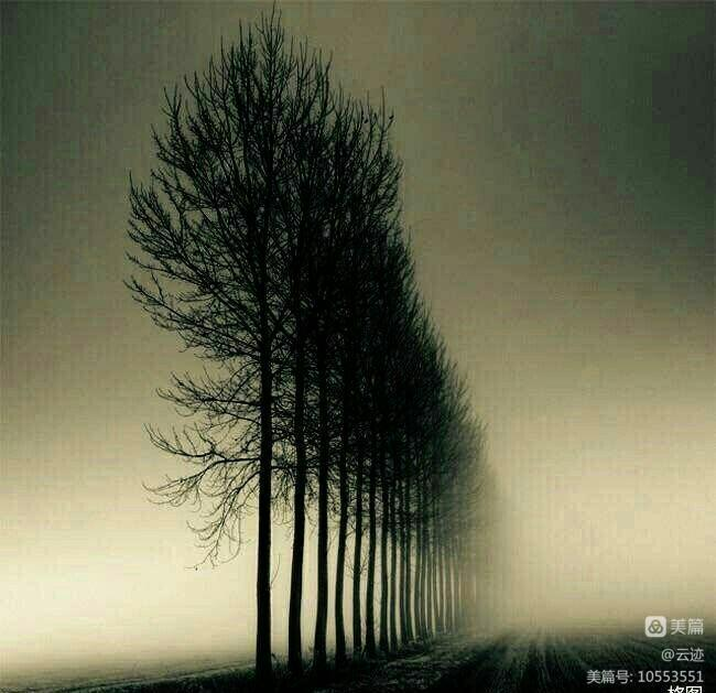 雾里……,关于云里来雾里去的介绍