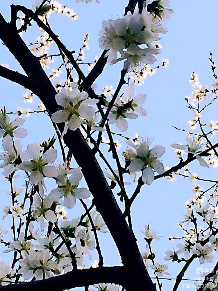 春色满园【诗词习作】 - 知足老马 - 知足老马