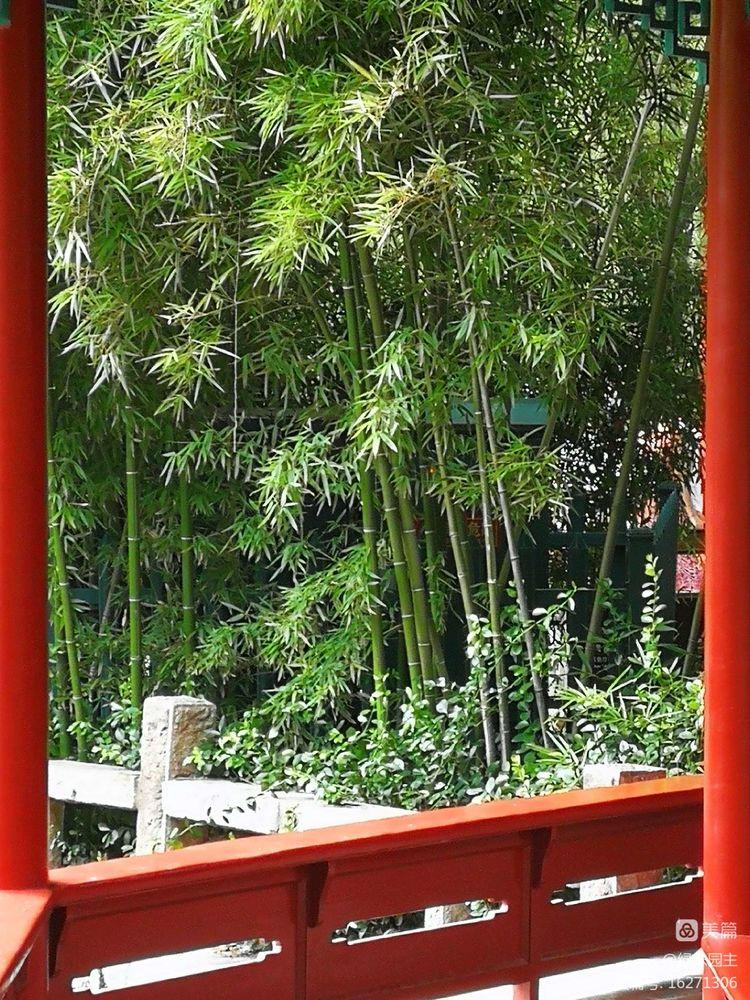 《【万和城测速注册】【王济生诗歌】万竹园诗二首》