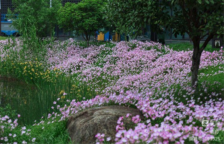 惜春 ・ 花�g�簦��P于惜春是��佛修的介�B(�D19)