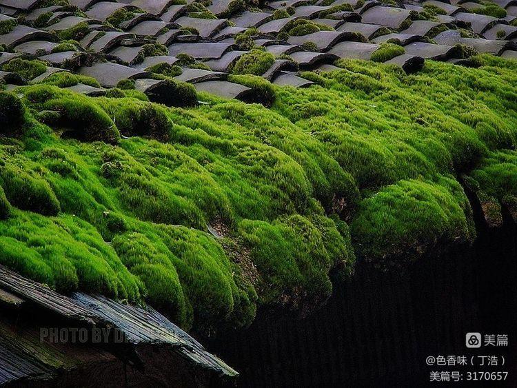 藏于山林的四川原味古镇――龙华(图49)