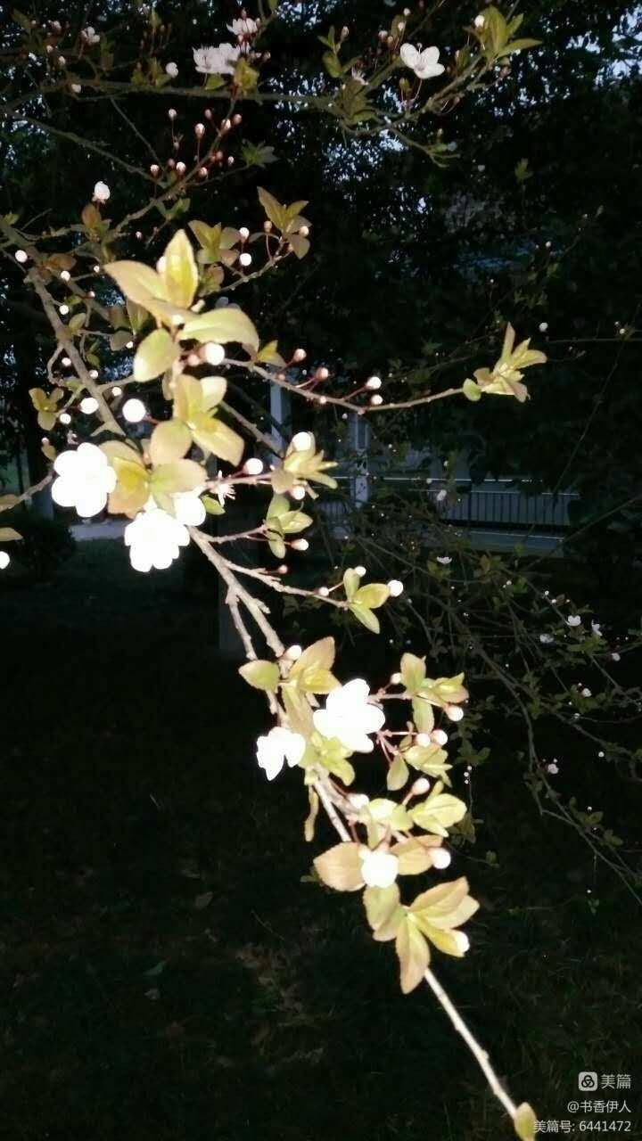 《我的故乡在龙潭》系列之四- 《又见花开》作者:肖中心(副本)(图53)