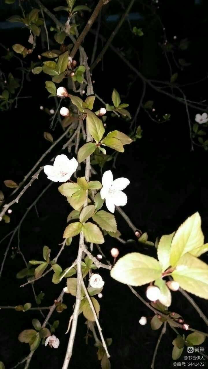 《我的故乡在龙潭》系列之四- 《又见花开》作者:肖中心(副本)(图6)