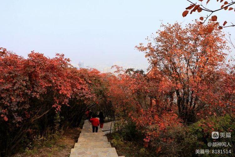 九龙峪红叶美醉了博山,惊艳了世界(图33)