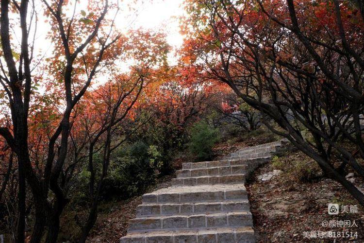 九龙峪红叶美醉了博山,惊艳了世界(图35)
