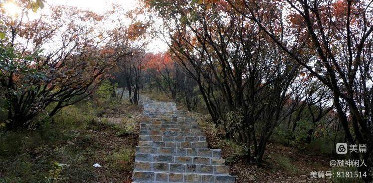 九龙峪红叶美醉了博山,惊艳了世界(图31)