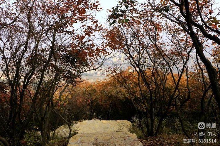 九龙峪红叶美醉了博山,惊艳了世界(图29)