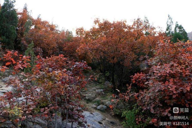 九龙峪红叶美醉了博山,惊艳了世界(图11)