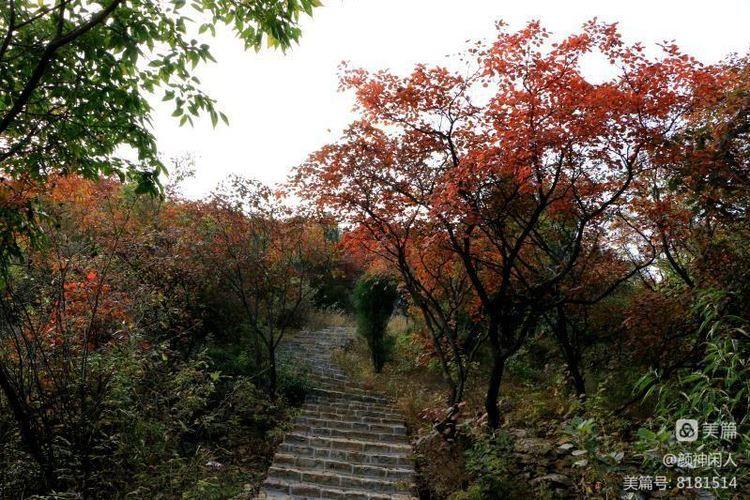 九龙峪红叶美醉了博山,惊艳了世界(图39)