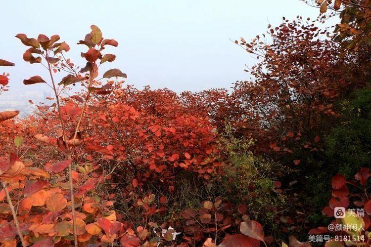 九龙峪红叶美醉了博山,惊艳了世界(图23)