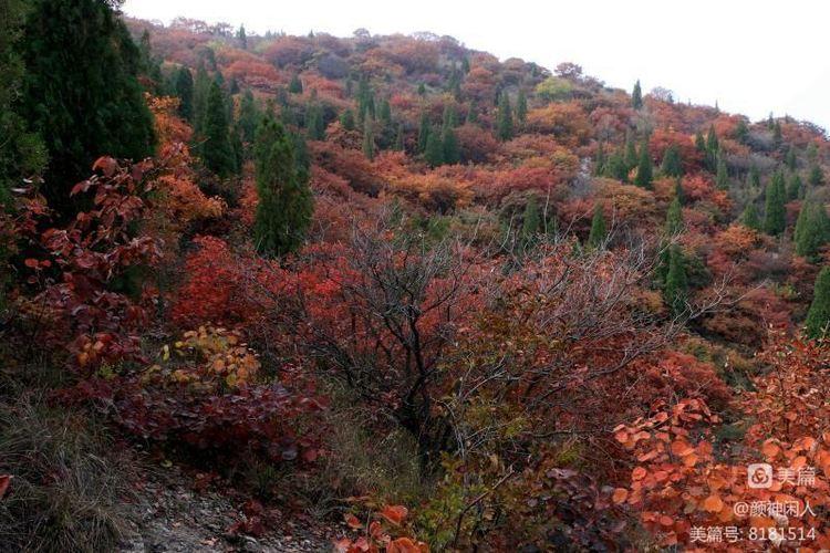 九龙峪红叶美醉了博山,惊艳了世界(图18)