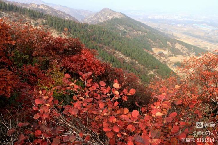九龙峪红叶美醉了博山,惊艳了世界(图24)